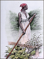 An anonymous slave woman (courtesy Northwind Picture Archives).